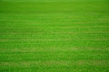 Green Grass Field Texture Background. Stock Photography - 48170292