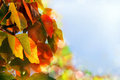 Colorful Autumn Leaves Royalty Free Stock Image - 48170446