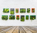 Vertical Garden On White Brick Wall Stock Images - 48181344