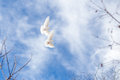 Couple Of White Pigeons On Blue Sky Royalty Free Stock Photo - 48197995