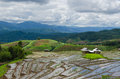 Rice Field In Thailand Royalty Free Stock Images - 48224889