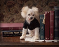 Small Goofy Dog In Glasses On Desk With Books Stock Photos - 48237743