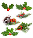 Set Of   Holly Leaves And Berries Stock Image - 48251121