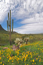 Blooming Desert Royalty Free Stock Images - 4832979