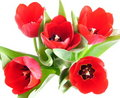 Red Spring Tulips Royalty Free Stock Image - 4833686