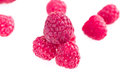 Fruits Of Raspberry Royalty Free Stock Photo - 48305775