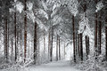 Snowy Road Through The Wintry Forest Royalty Free Stock Photography - 48312487