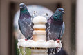 Two Pigeon On Fountain Royalty Free Stock Photo - 48336645