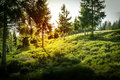 Forest With Sunset In Poland. Royalty Free Stock Photography - 48348767