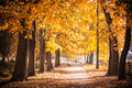 Autumn Park Path Royalty Free Stock Photo - 48393615