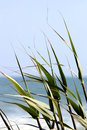 Reed By The Ocean Stock Image - 48403971