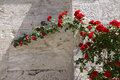 Roses Growing Against The Stone Outer Walls Stock Image - 48413021