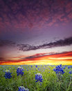 Bluebonnets In The Texas Hill Country Stock Image - 48427351