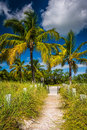 Path To The Beach And Palm Trees At Smathers Beach, Key West, Fl Stock Photography - 48446632