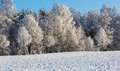 Trees Branches With Snow Royalty Free Stock Image - 48465476