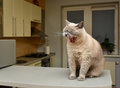 Hungry Cat Stock Images - 48469394