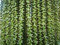 Pattern The Green Forest Root Royalty Free Stock Photos - 48481508