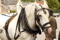 Draft Horse Royalty Free Stock Photography - 48496547