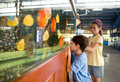 Girl Showing Brother The Colorful Fish Stock Photo - 4853340