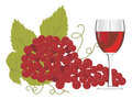 Red Wine Glass With A Bunch Of Grapes Stock Photo - 4854220