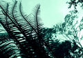 Cycad - Plant Abstract Royalty Free Stock Image - 4856046