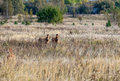 Horses In Chernobyl Zone Royalty Free Stock Images - 48502129