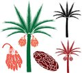 Palm Tree Royalty Free Stock Photography - 48546367