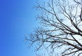 Dry Tree And Blue Sky Background Royalty Free Stock Photos - 48549568