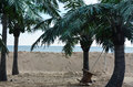 Tropical Beach With Palm Trees Royalty Free Stock Images - 48561319