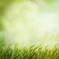 Summer Natural Backgrounds Royalty Free Stock Photo - 48567515