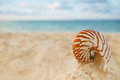 Nautilus Sea Shell On Golden Sand Beach In  Soft Sunset Light Royalty Free Stock Image - 48568136