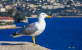 Seagull Stock Images - 48574704