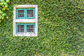 White Window Covered With Green Ivy Royalty Free Stock Photography - 48578607