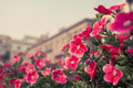 Red Flowers Stock Photography - 48589362