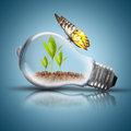 Light Bulb With Soil And Green Plant Sprout Inside And Butterfly Stock Image - 48597691