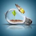 Light Bulb With Soil And Green Plant Sprout Inside And Butterfly Stock Image - 48597711