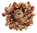 Squirrel Nut Burst Royalty Free Stock Image - 48599506