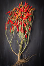 Chilies Royalty Free Stock Photo - 48605525