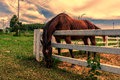 Horses Grazing Grass On The Farm . Stock Image - 48614371