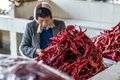 Pile Of Red Hot Chilly Peppers Stock Photography - 48620022