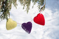 Valentines Day Hearts Hanging From Pine Tree Stock Images - 48646164