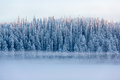 Snowy Pine Trees With Fog On A Winter Landscape Stock Images - 48680764