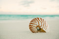 Nautilus Sea Shell On Golden Sand Beach In  Soft Sunset Light Royalty Free Stock Image - 48695006
