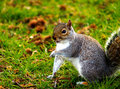 Squirrel Royalty Free Stock Photography - 4877187
