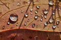 Close Up Super Macro Shot Water Drop On Leaf And Flower Royalty Free Stock Photography - 48709927