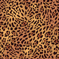 Safari Leopard Fur Seamless Vector Print Royalty Free Stock Image - 48711386