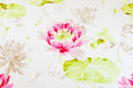 Water Lily Royalty Free Stock Image - 48711626