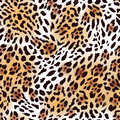 Far Eastern Leopard Fur Seamless Vector Print Royalty Free Stock Images - 48713929