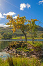 Lone Tree,Lake And Mountain Royalty Free Stock Images - 48716739