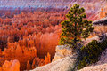Bryce Amphitheater, Bryce Canyon National Park Royalty Free Stock Photos - 48734188